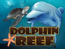 Риф Дельфина от онлайн-казино